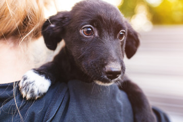 Foster dog with new owner