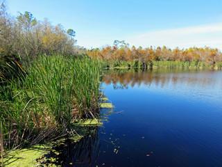 Scenic Landscape at Six Mile Cypress Slough Preserve Florida