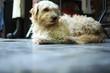 canvas print picture - Hund