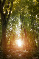 Beautiful forest along the pathway and sunshine over the trees.