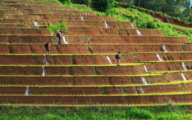 photographer taking photo of rice fields on terraced at Chiang M