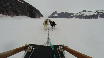 Rear view of sled dogs pulling a toboggan on glacier