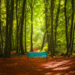 Deep green forest scenery and blue bench