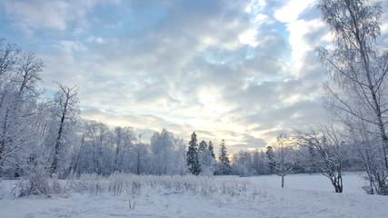 Winter forest. timelapse