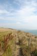 roleta: Dorset coastal path near Worth Maltravers
