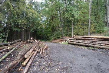 Spruce logs along road near forest