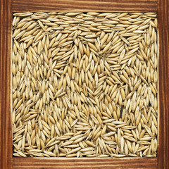 Oat, collection of products