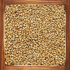 Wheat, collection of products