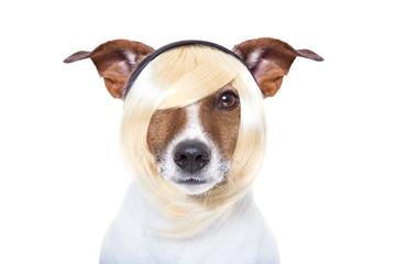 beauty dog
