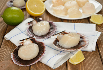 Raw scallops in the shell