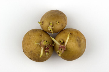 Potatoes with sprouted shoots