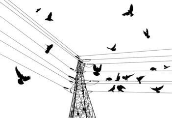 electrical pylon and birds isolated on white