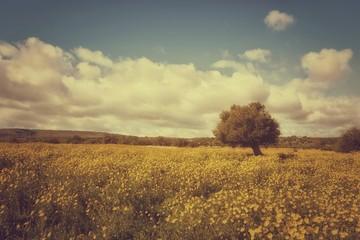 Prato con fiori gialli albero e nuvole nel cielo vintage