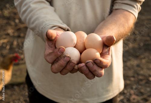 Leinwanddruck Bild Farmer with fresh organic eggs