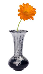 orange flower in blue vase on white