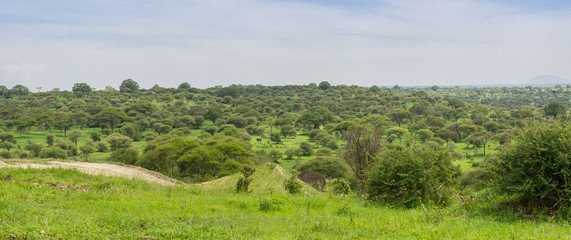 Paysage safari