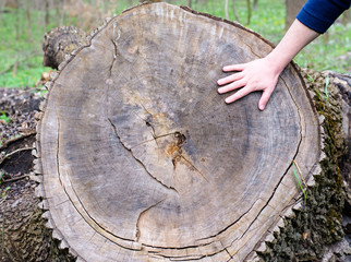 Children's hand stroking the cut tree