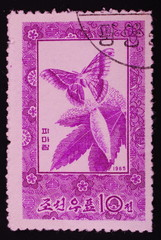 Postage stamp  North Korea shows image of a butterfly