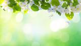 Fototapety Spring blossom background