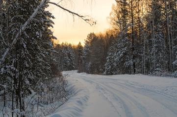 зимняя дорога в сосновом лесу