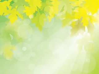 Summer or Spring sunny with green leaves background vector