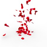 Rose petals falling on a surface