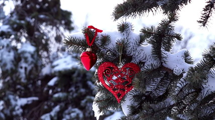 Spruce Branch with Snow and Heart Sways in the Wind