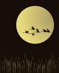flingbirdsfullmoon