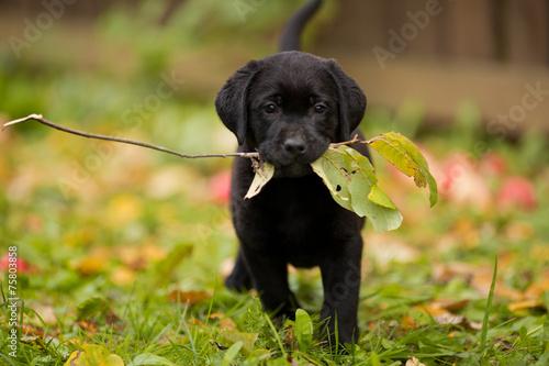 Foto op Canvas Dragen Красивый щенок