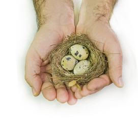 man hand and nest with eggs