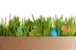 Easter eggs on fresh green grass over white background