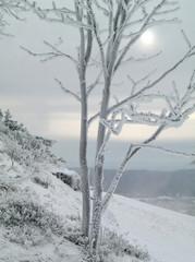Baum im Winter mit Schnee und Eis
