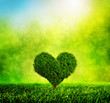 Heart shaped tree growing on green grass. Love, nature