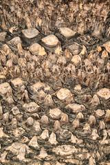 Kora palmy tropikalnej