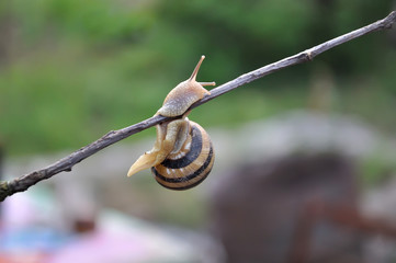 Snail on a branch