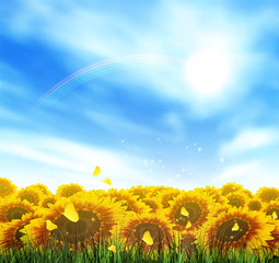 Summer, Field, Sky, Sun, Grass, Rainbow, Flower And Butterflies