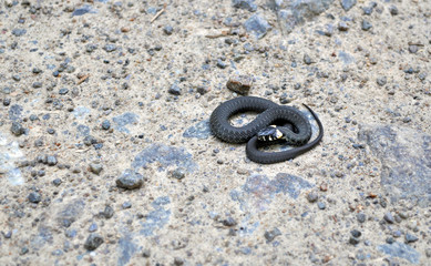snake on the ground