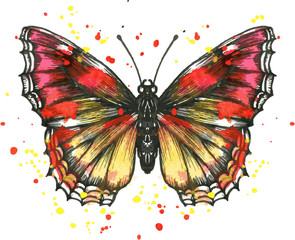 Vector butterfly in watercolor