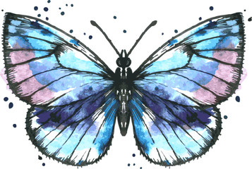 Vector blue butterfly in watercolor