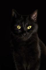Portrait of black cat against black background