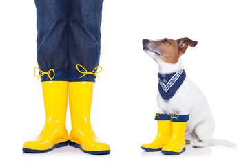 dog ready for a walk in rain