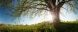 Leinwandbild Motiv Oak tree