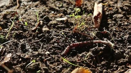 Earthworm walking