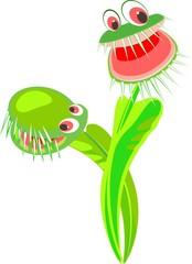 Venus flytrap predatory flower