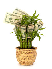 Money growing concept