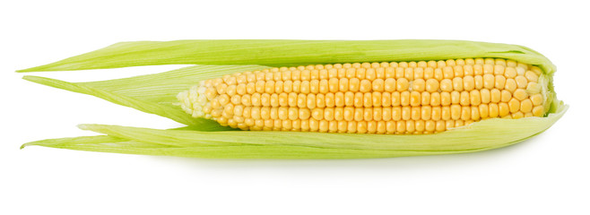 fresh corn ear isolated on the white background