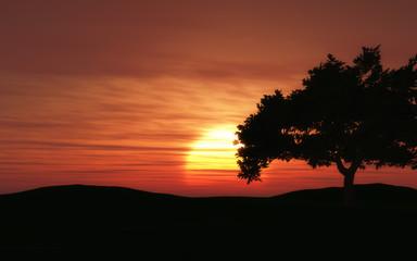 3D landscape with sunset