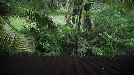 Tropical rain in a garden