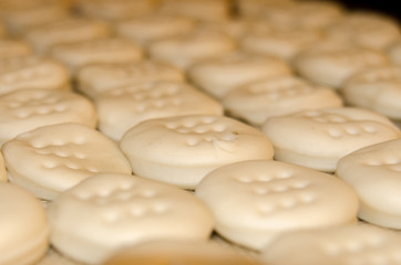 Rows of Beaten Biscuits Ready for Baking