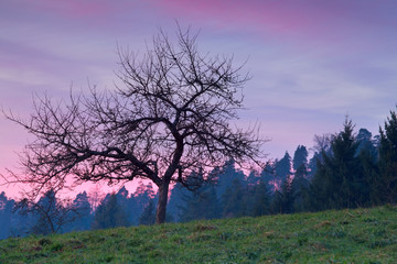 tree in mountains at purple sunset